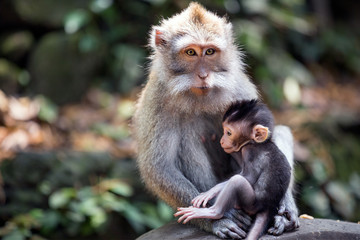 Thoughtful monkey with a baby