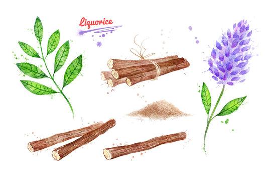 Watercolor illustrations of Liquorice