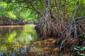 Manglar o mangle es un ecosistema con árboles muy tolerantes a las sales existentes en la zona intermareal cercana a la desembocadura de cursos de agua dulce