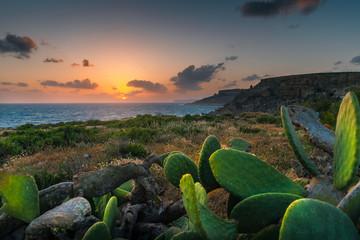 Fototapete - Tropical nature. Nature of Malta.