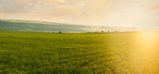 Wall Mural - Panoramic view of green grass field and evening sun rise