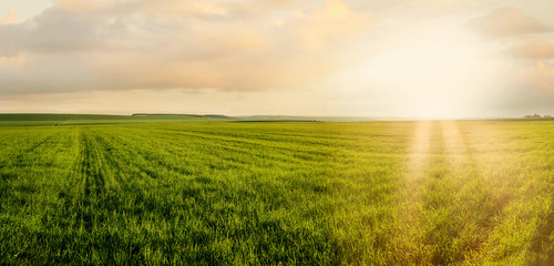 Wall Mural - Image of green grass field and evening cloudy sunshne