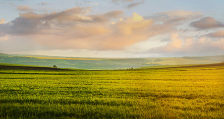 Wall Mural - Panoramic view of green grass field and evening cloudy sky