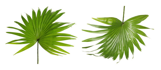 Set of green tropical leaves on white background