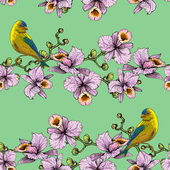 Birds on orchid branches