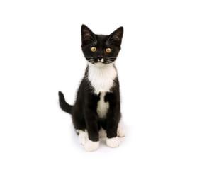 Süße schwarz weiße Katze, Katzenbaby