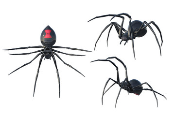 Set of 3 Black Widow spiders isolated on white, 3d render.