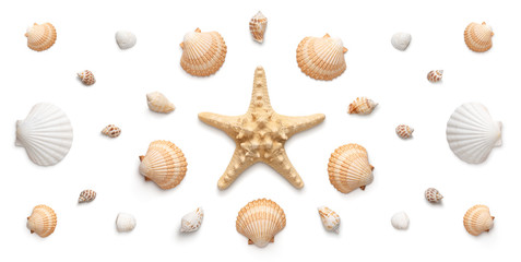 High angle, panoramic view of starfish and seashells isolated on white background