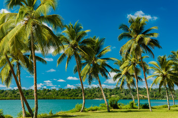Tropical resort destination in Port Vila, Efate Island, Vanuatu, beach and palm trees