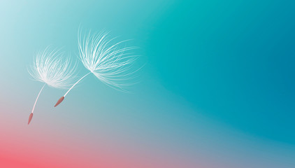 Dandelion seeds flying on blue background vector illustration