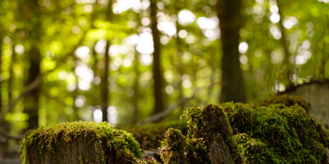 Wald Baumstumpf Moos