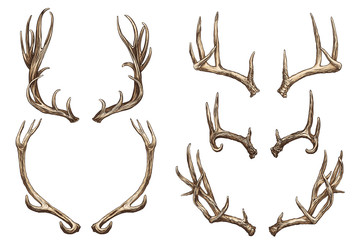 Vector illustration. Hand drawing on a graphic tablet. Set of deer horns.
