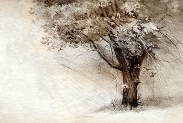 Tree. Pencil drawing on paper