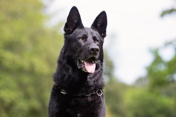 Portrait of a beautiful dog