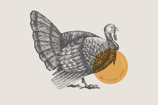 Retro engraving turkey. Hand-drawn picture with a poultry. Can be used for menu restaurants, for packaging in markets and shops. Vector vintage illustrations.