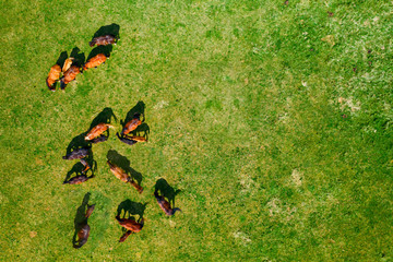 Birds eye view of horses grazing on pasture