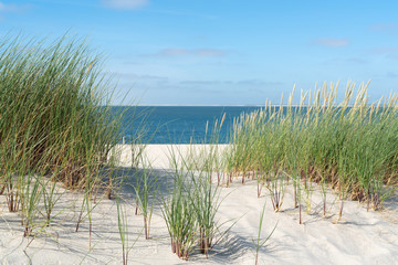 Dune with beach grass.