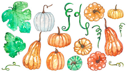 Hand painted watercolor set of pumpkin and leaves