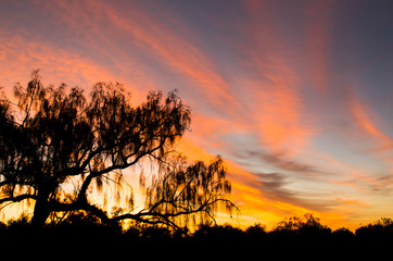 Beautiful red - orange - blue sunset with tree silhouettes in the front