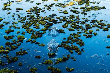 Salt Water Crocodile (Salty) in the water in Kakadu Nation Park (Australia, Northern Territory)