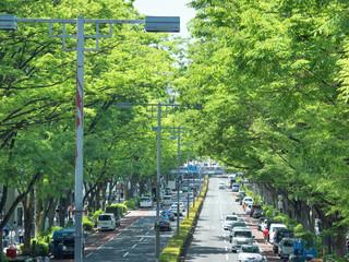 Fototapete - 新緑の表参道