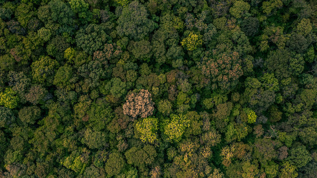 Background of forest, Aerial top view background forest, Texture of forest.