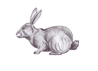 illustration of a pencil rabbit on a white background
