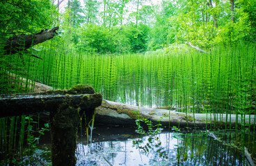 Peaceful and beautiful forest brook. Summer background.