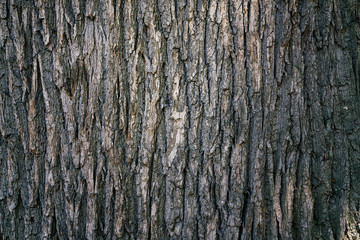 dry tree bark texture and background, nature concept