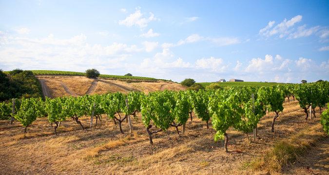 Paysage de coteaux dans le Layon en Anjou