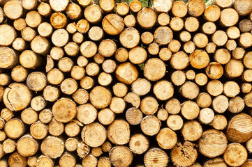 Stacked Woodpile in forest at summer