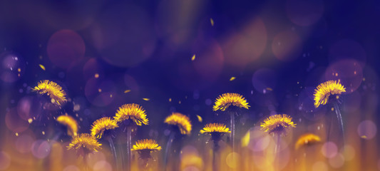 Yellow bright dandelions on a blue background. Spring summer creative background. Artistic image in backlight.