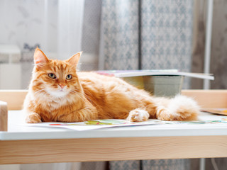 Cute ginger cat is lying on children desk among drawings. Fluffy pet in kids room.