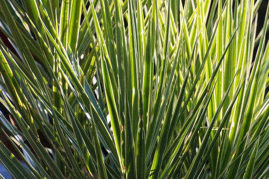 Green ornamental grass plants background