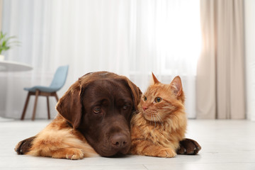 Cat and dog together on floor indoors. Fluffy friends Fototapete