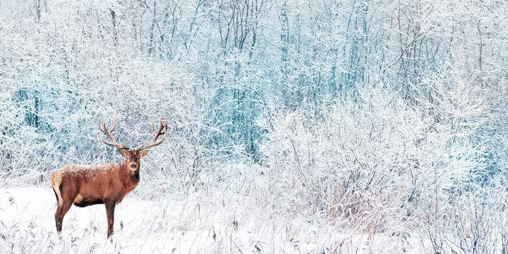 Noble Deer in the winter forest. Winter wonderland. Christmas landscape. Wide format.