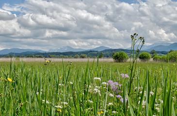Bavaria - near Chiemsee - Nature Reserve