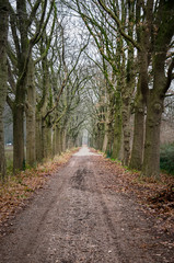 Dirt road near Sint Oedenrode, The Netherlands, lined with bare trees