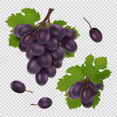 Black grape vector illustration. Bunch of grapes, leaves and berries realistic vector image isolated on transparent background