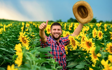 Farmer in a sunflower field. Agricultural concept