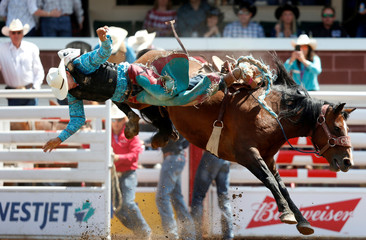 Kittson of Browning, Montana gets tossed off the horse Betrayed Cankaid in the junior saddle bronc event during the Calgary Stampede rodeo in Calgary