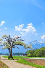 ヤマナシの木と八ヶ岳 長野県 南牧村 野辺山