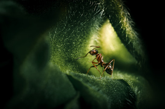 Macroshot of an ant sitting on a sunflowerl leaf