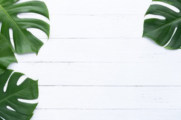 Isolate Dark green Monstera large leaves, philodendron tropical foliage plant growing in wild on white wood background concept for flat lay summer greenery leaf texture rainforest floral Wall mural