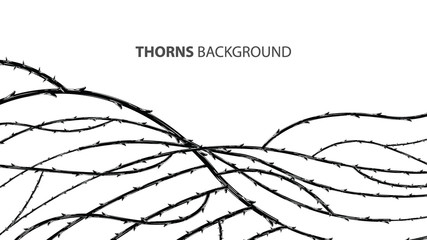 Blackthorn branches with thorns stylish background.
