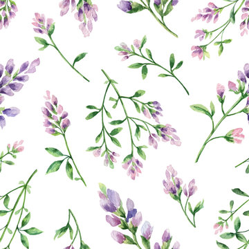 Watercolor vector seamless pattern with Alfalfa flowers and leaves isolated on white background.