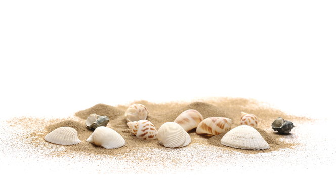 Sea shells in sand pile isolated on white background