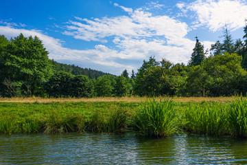 Schilf am Ufer des Wispersees