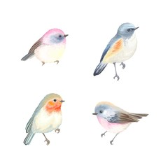 Collection of beautiful birds Robin, Himalayan Bluetail, pink fantasy birds . Vector illustration birds for your design.