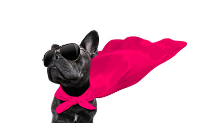 Fotobehang Franse bulldog super hero dog